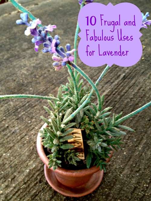 10 Frugal uses for Lavender