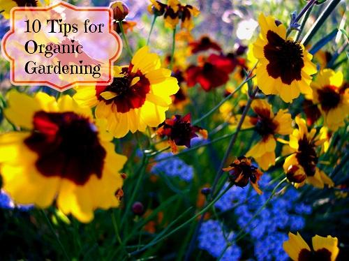 10 tips for organic gardening