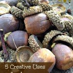 5 Creative Uses for Acorns