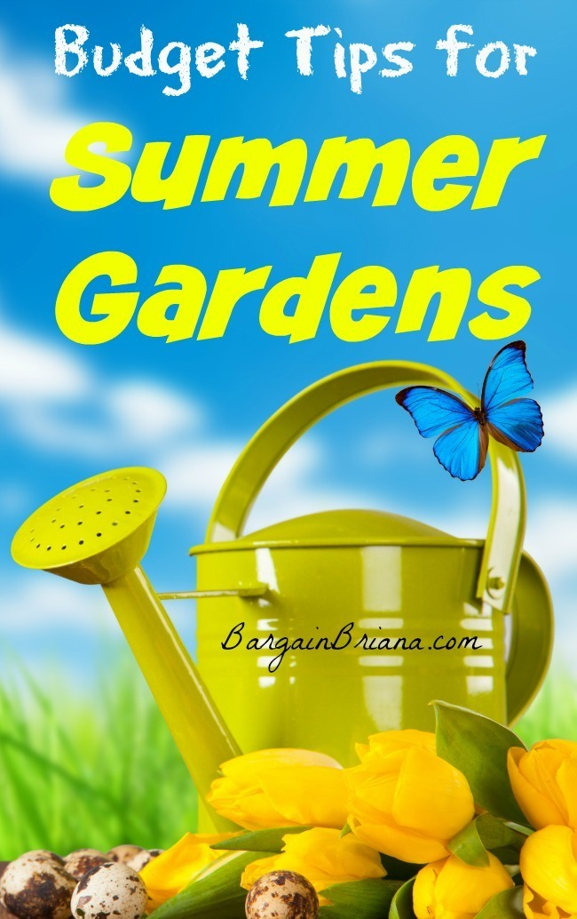 Budget Tips for Summer Gardens