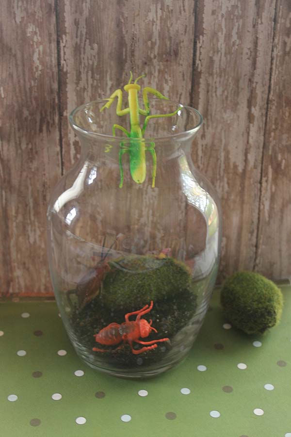 Bug Terrarium Dollar Craft