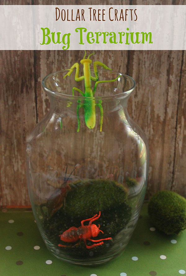 Bug Terrarium Dollar Store Kids Craft