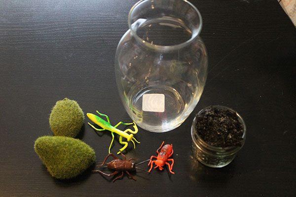 Bug Terrarium Supplies Ingredients