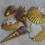 DIY Gold Painted Seashells Craft