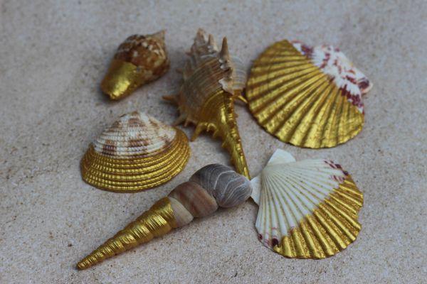 DIY Gold Painted Seashells Craft