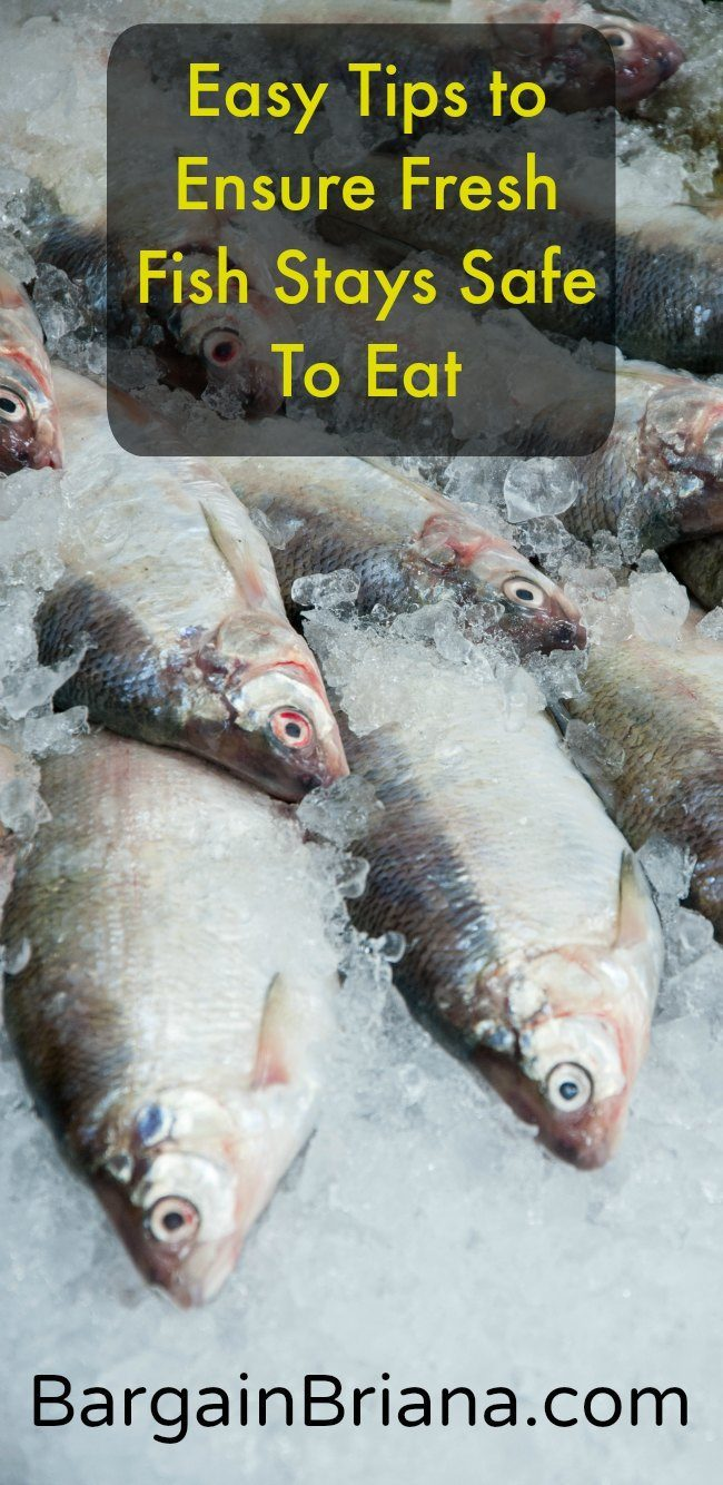 Easy Tips to Ensure Fresh Fish Stays Safe To Eat