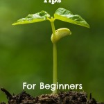 Frugal Gardening Tips for Beginners
