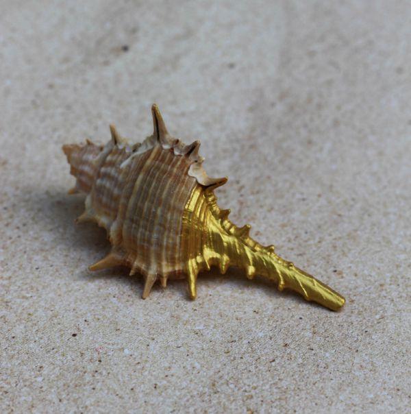 Gold Seashell