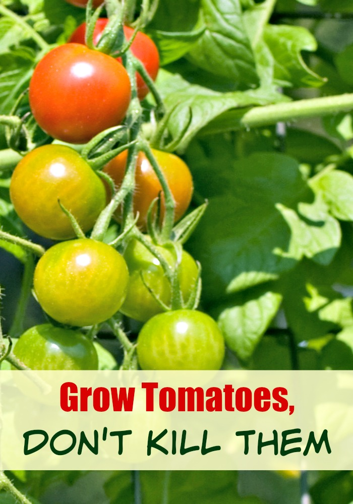Grow Tomatoes Don't Kill Them