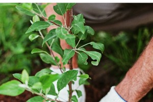 How to Create a Frugal Garden