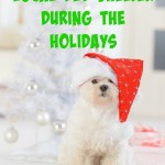 How to Help a Local Pet Shelter During the Holidays