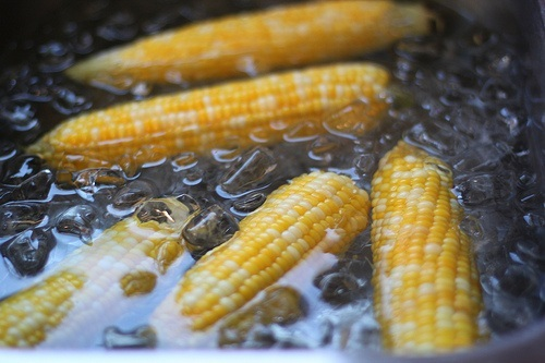 Ice Bath for Corn