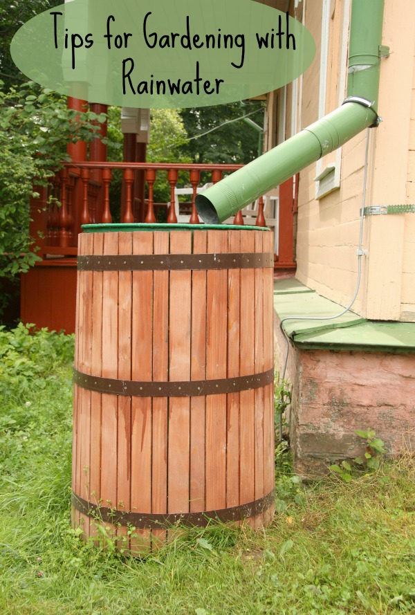 Tips for Gardening with Rainwater