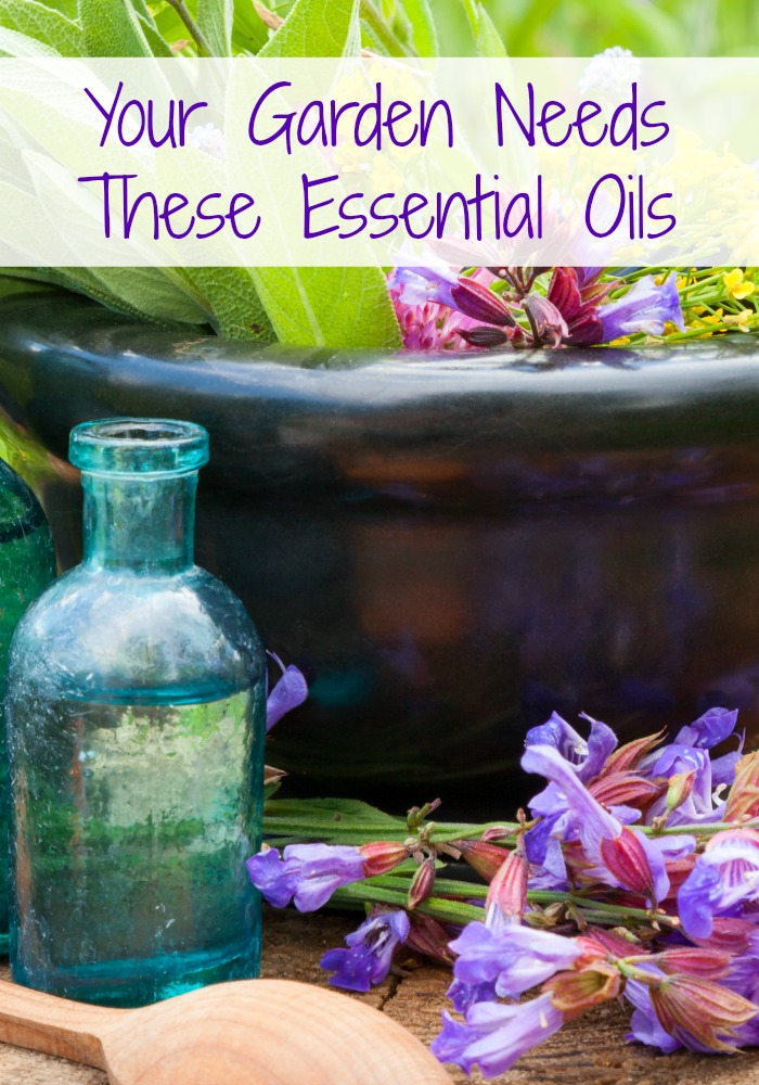 Your Garden Needs These Essential Oils