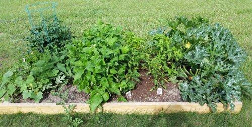 Zucchini in My Garden
