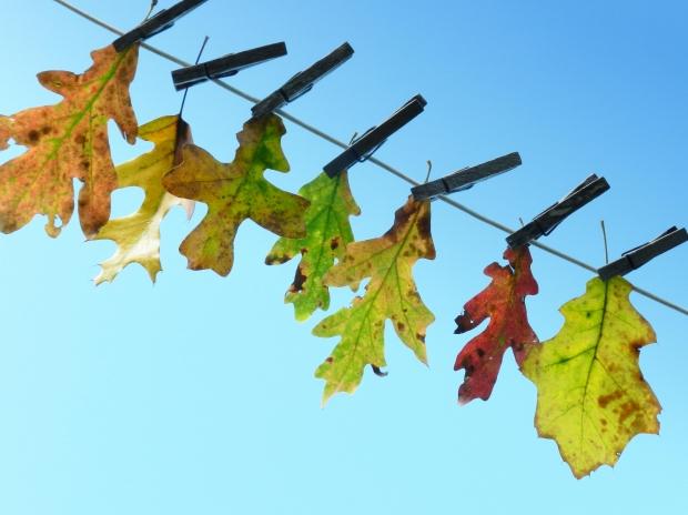 leafbanner